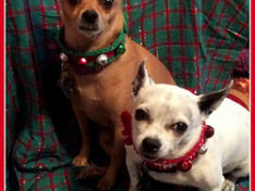 Christmas Fun For All The Family Including Your Pets